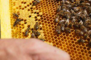 Parrainage d'abeilles : activités