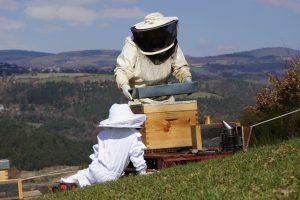 Installation de ruche au Roucat