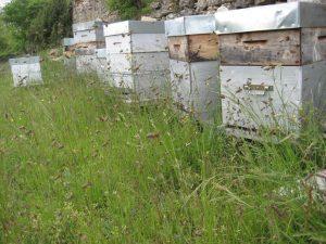 Activité des ruches au printemps