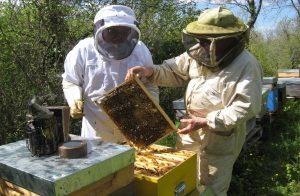 adopter une ruche sur parrainage de ruches en loz re. Black Bedroom Furniture Sets. Home Design Ideas