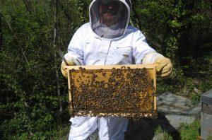 Récolte du miel - Parrainage de ruches