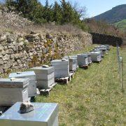 Saison ruchers Lozère
