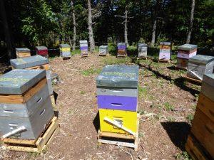 Rucher en Lozère : financer une ruche