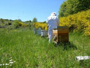 Apiculteur Lozère : soin des abeilles