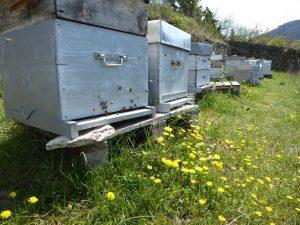 Printemps : c'est le moment de parrainer une ruche !