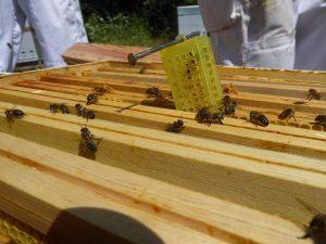 Elevage d'abeilles en Lozère : parrainage